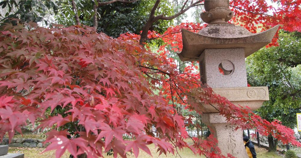 ちょうど6年前の今日、私は紅葉を撮影しに友達と京都に来ていました。