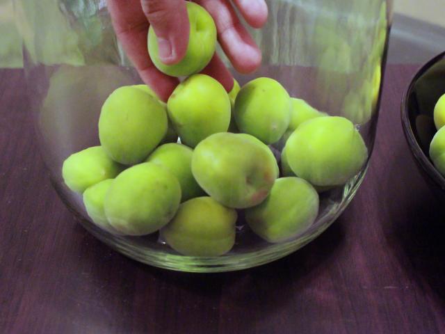 瓶の底に梅を優しく敷いていく