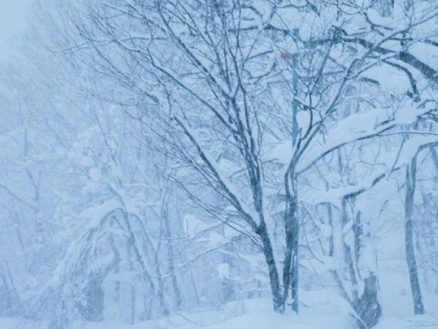 雪山での飛行機事故